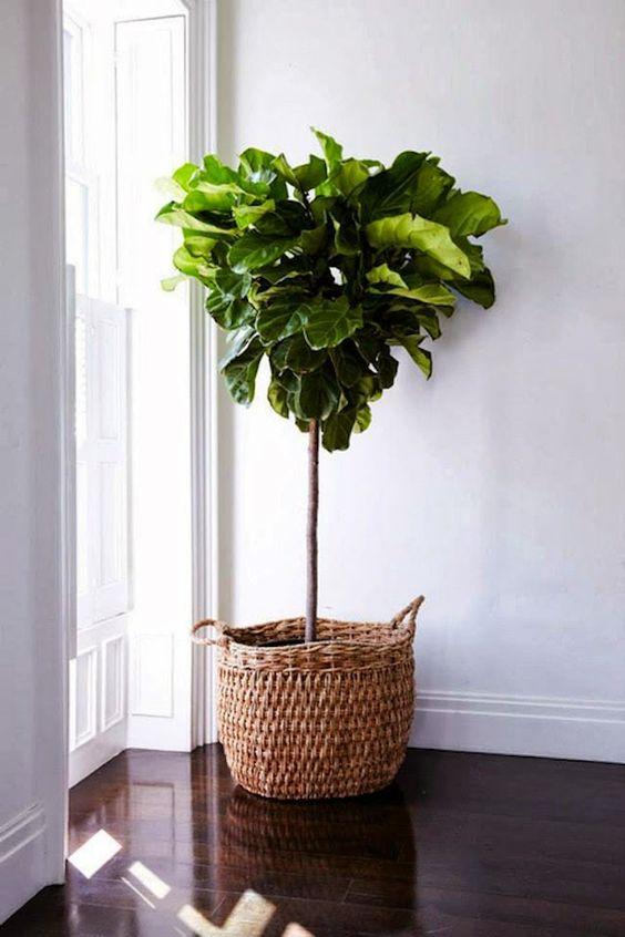 plante med høyde